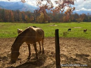 Tour of Historic Cades Cove