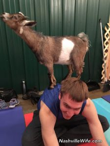Goat Yoga…No Joke!