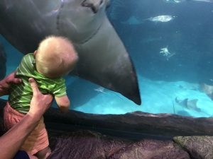 Gatlinburg Ripleys Aquarium of the Smokies